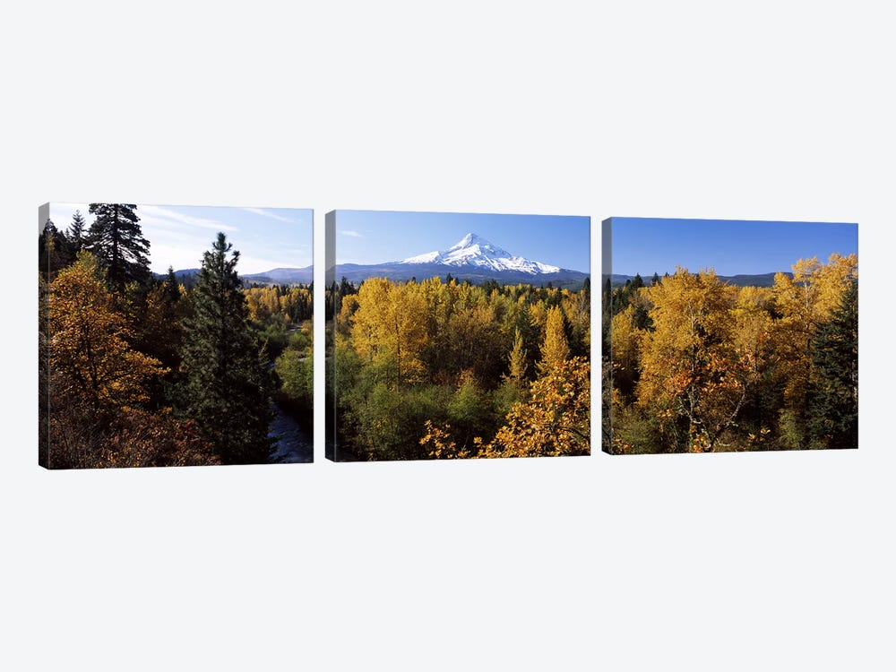 Cottonwood trees in a forest, Mt Hood, Hood River, Mt. Hood National Forest, Oregon, USA by Panoramic Images 3-piece Canvas Wall Art