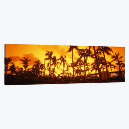 Palm trees on the beach, The Setai Hotel, South Beach, Miami Beach, Florida, USA Canvas Print #PIM6680} by Panoramic Images Canvas Art