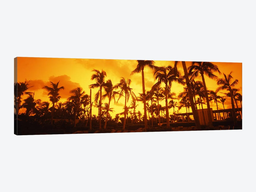 Palm trees on the beach, The Setai Hotel, South Beach, Miami Beach, Florida, USA by Panoramic Images 1-piece Canvas Wall Art