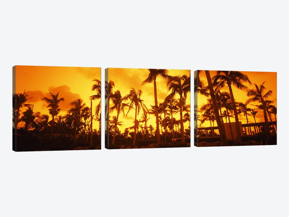Palm trees on the beach, The Setai Hotel, South Beach, Miami Beach, Florida, USA 3-piece Canvas Artwork