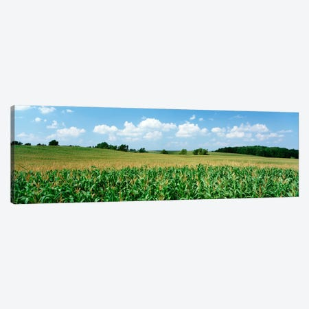 Corn Crop In A Field, Wyoming County, New York, USA Canvas Print #PIM66} by Panoramic Images Art Print