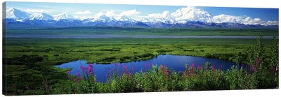 Spring Landscape, Denali National Park, Alaska, USA Canvas Art Print