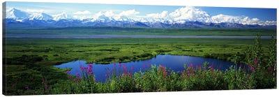 Spring Landscape, Denali National Park, Alaska, USA Canvas Art Print