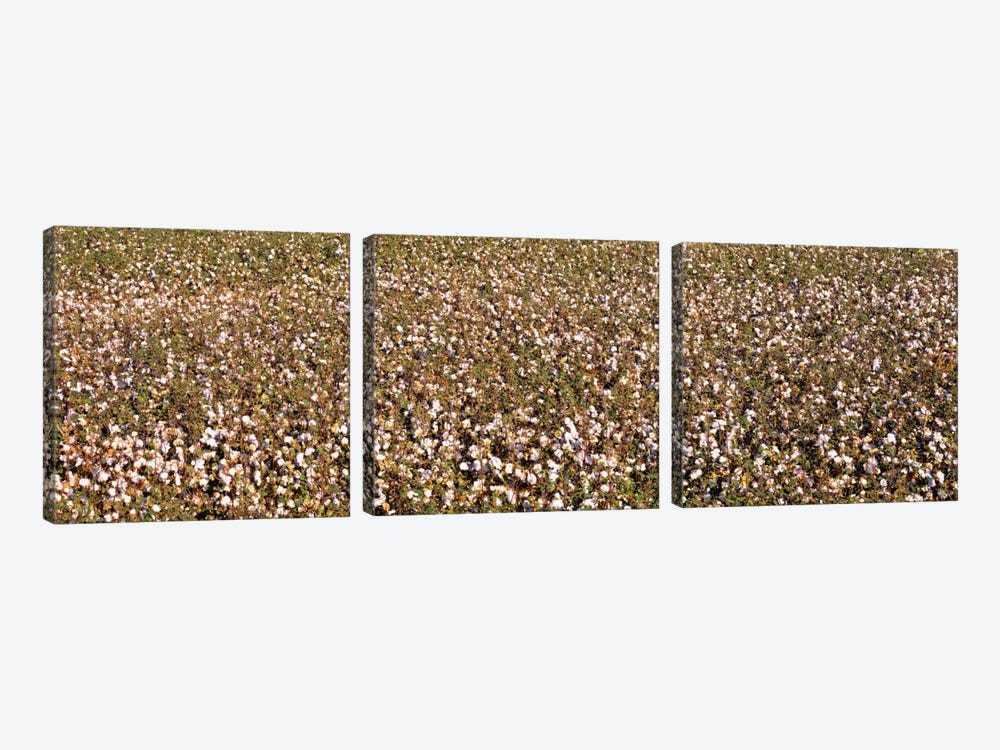 High angle view of a cotton fieldFresno, San Joaquin Valley, California, USA by Panoramic Images 3-piece Canvas Art Print