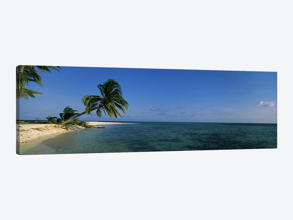 A Leaning Palm Tree, Laughing Bird Caye, Stann Creek District, Belize by Panoramic Images 1-piece Canvas Print