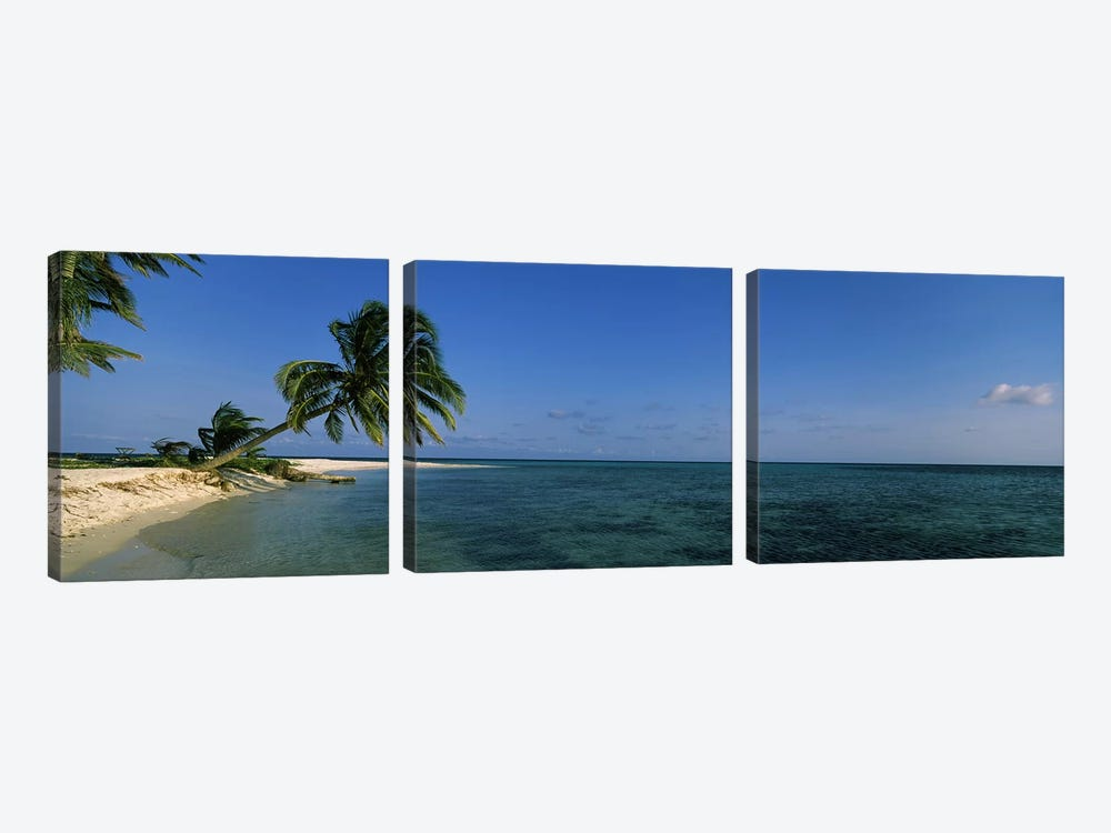 A Leaning Palm Tree, Laughing Bird Caye, Stann Creek District, Belize by Panoramic Images 3-piece Canvas Print