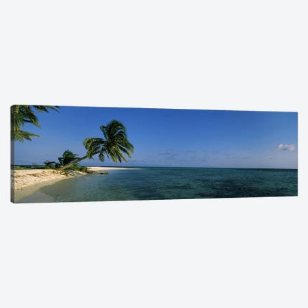 A Leaning Palm Tree, Laughing Bird Caye, Stann Creek District, Belize Canvas Print #PIM6746} by Panoramic Images Canvas Wall Art