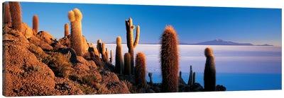 Cactus on a hillSalar De Uyuni, Potosi, Bolivia Canvas Art Print