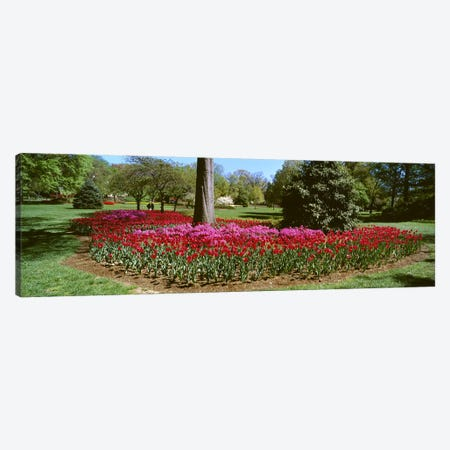 Azalea and Tulip Flowers in a park, Sherwood Gardens, Baltimore, Maryland, USA Canvas Print #PIM6800} by Panoramic Images Canvas Wall Art