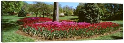 Azalea and Tulip Flowers in a park, Sherwood Gardens, Baltimore, Maryland, USA Canvas Print #PIM6800
