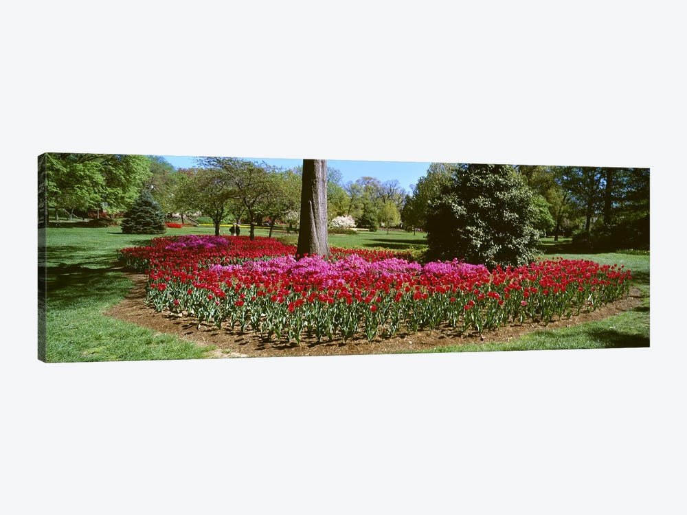 Azalea and Tulip Flowers in a park, Sherwood Gardens, Baltimore, Maryland, USA by Panoramic Images 1-piece Canvas Print