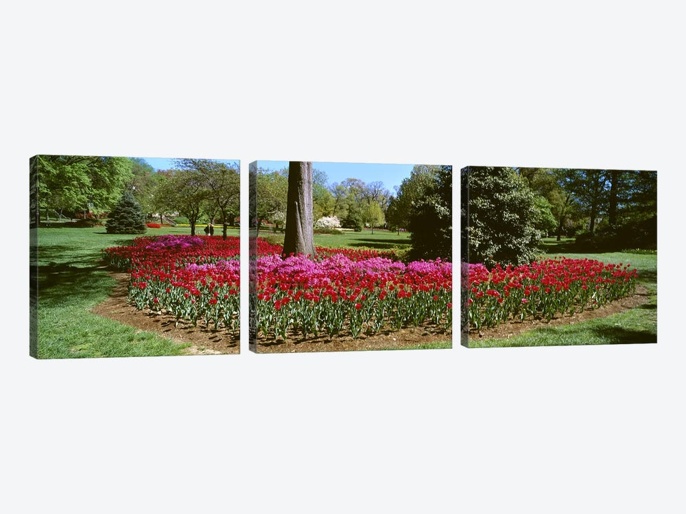 Azalea and Tulip Flowers in a park, Sherwood Gardens, Baltimore, Maryland, USA by Panoramic Images 3-piece Art Print