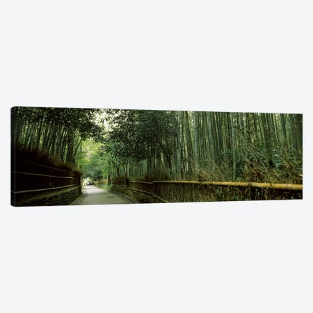 Road passing through a bamboo forest, Arashiyama, Kyoto Prefecture, Kinki Region, Honshu, Japan Canvas Print #PIM6812} by Panoramic Images Canvas Print