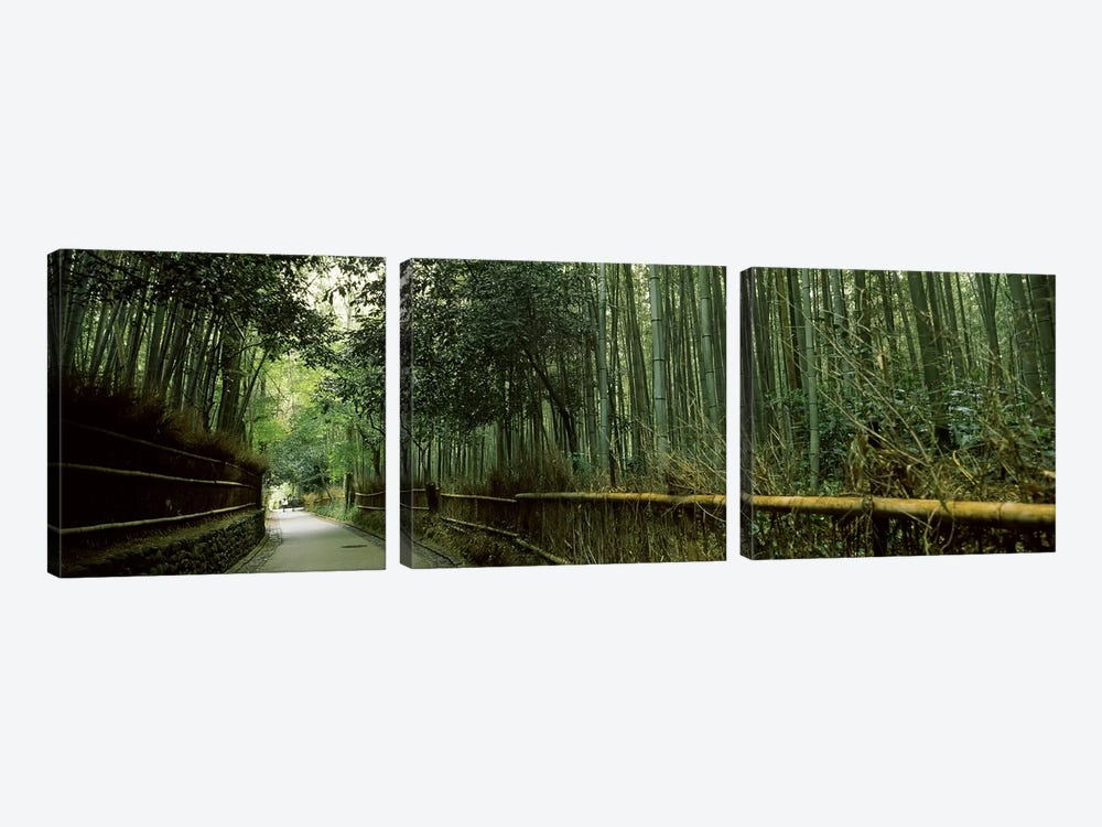 Road passing through a bamboo forest, Arashiyama, Kyoto Prefecture, Kinki Region, Honshu, Japan by Panoramic Images 3-piece Canvas Art