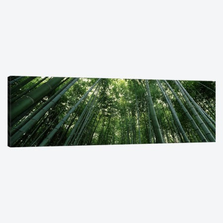 Low angle view of bamboo trees, Arashiyama, Kyoto Prefecture, Kinki Region, Honshu, Japan Canvas Print #PIM6813} by Panoramic Images Canvas Art Print