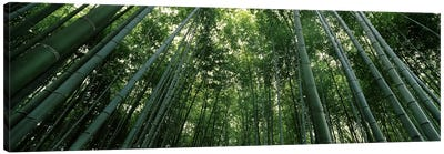 Low angle view of bamboo trees, Arashiyama, Kyoto Prefecture, Kinki Region, Honshu, Japan Canvas Art Print