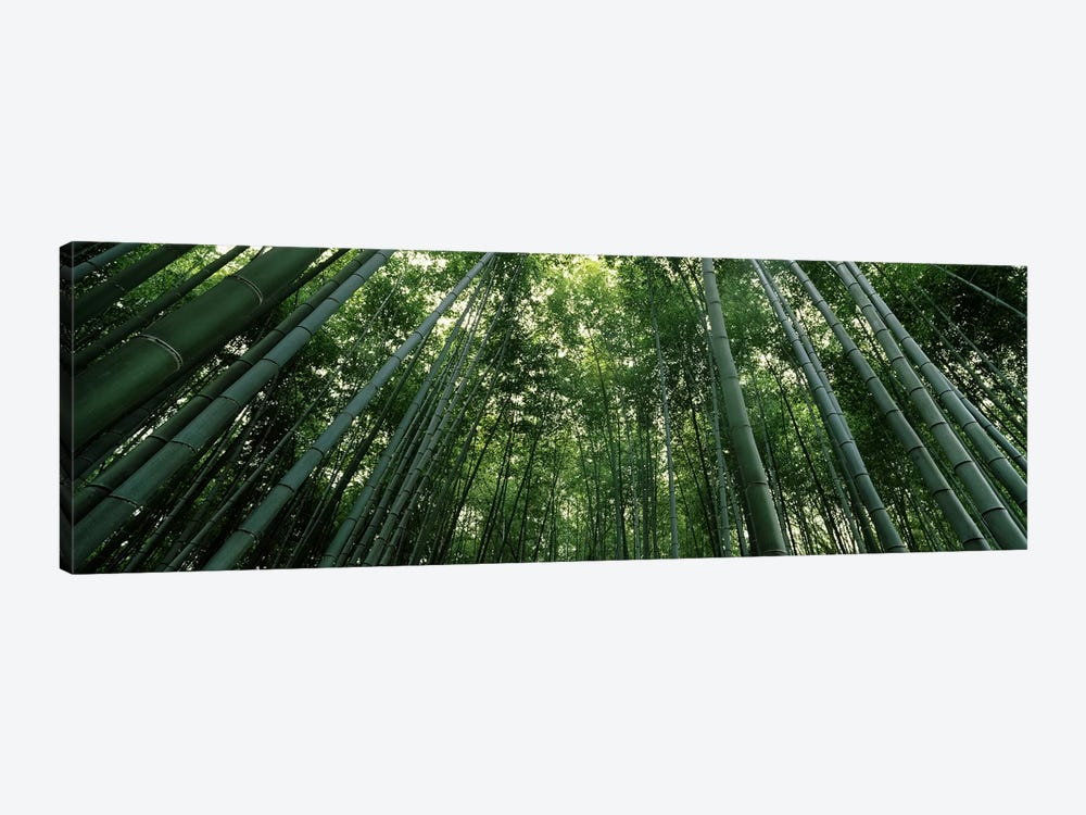 Low angle view of bamboo trees, Arashiyama, Kyoto Prefecture, Kinki Region, Honshu, Japan by Panoramic Images 1-piece Canvas Art Print