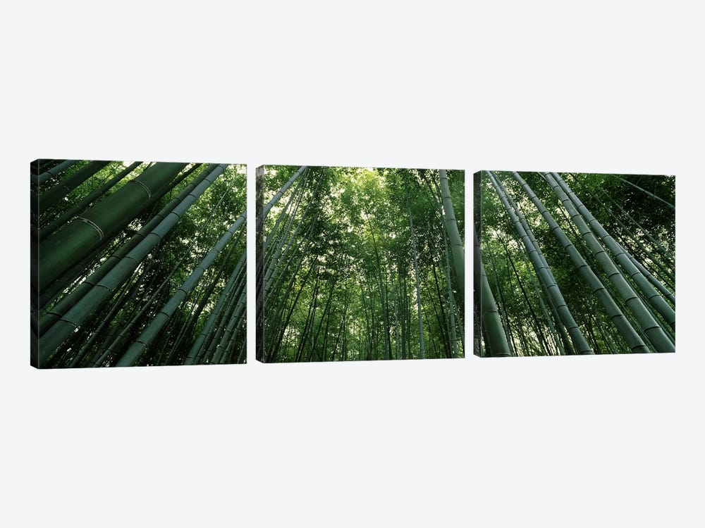 Low angle view of bamboo trees, Arashiyama, Kyoto Prefecture, Kinki Region, Honshu, Japan by Panoramic Images 3-piece Canvas Art Print