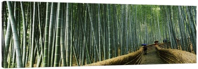 Stepped walkway passing through a bamboo forest, Arashiyama, Kyoto Prefecture, Kinki Region, Honshu, Japan Canvas Art Print