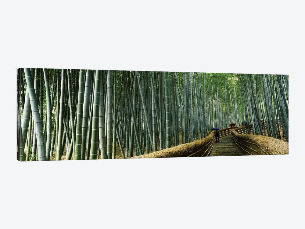 Stepped walkway passing through a bamboo forest, Arashiyama, Kyoto Prefecture, Kinki Region, Honshu, Japan by Panoramic Images 1-piece Canvas Art