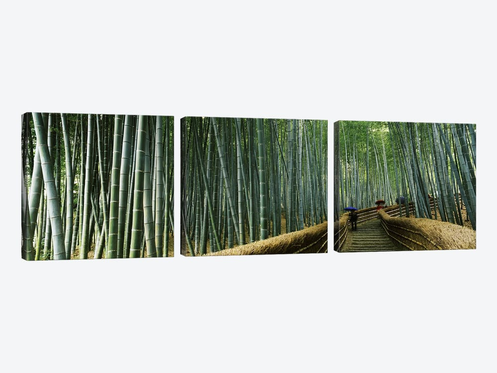 Stepped walkway passing through a bamboo forest, Arashiyama, Kyoto Prefecture, Kinki Region, Honshu, Japan by Panoramic Images 3-piece Canvas Wall Art