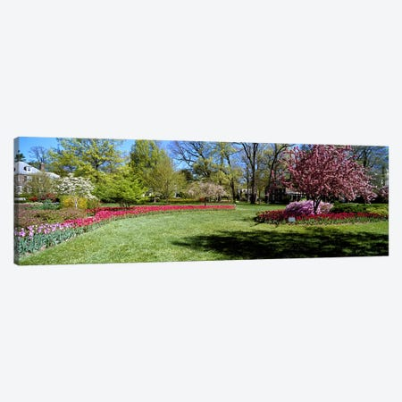 Tulips and cherry trees in a garden, Sherwood Gardens, Baltimore, Maryland, USA Canvas Print #PIM6829} by Panoramic Images Canvas Artwork