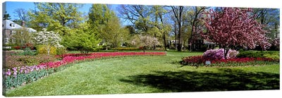 Tulips and cherry trees in a garden, Sherwood Gardens, Baltimore, Maryland, USA Canvas Print #PIM6829