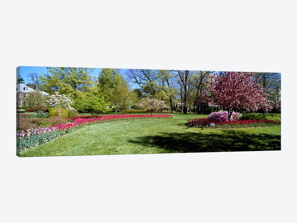 Tulips and cherry trees in a garden, Sherwood Gardens, Baltimore, Maryland, USA 1-piece Canvas Art