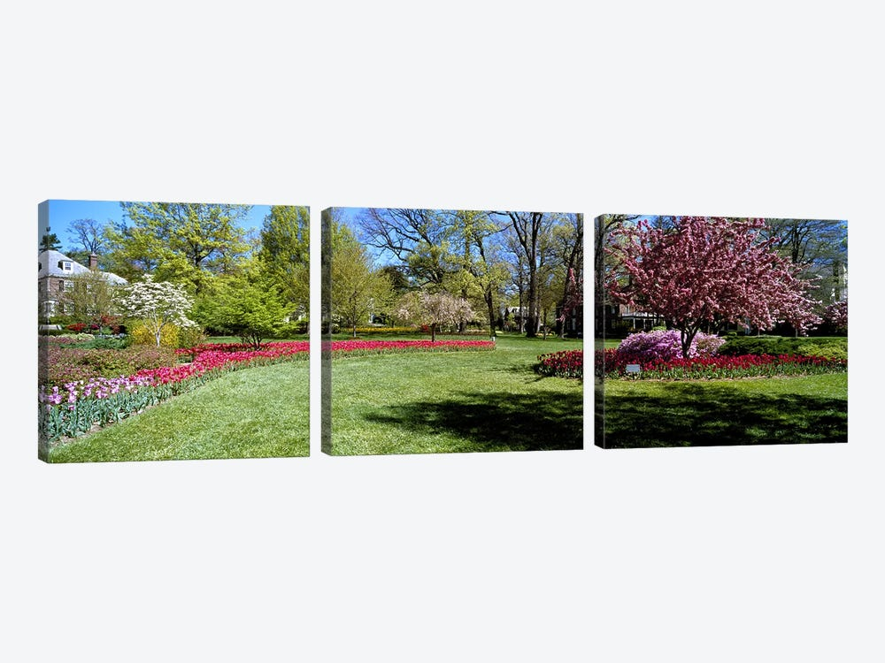 Tulips and cherry trees in a garden, Sherwood Gardens, Baltimore, Maryland, USA by Panoramic Images 3-piece Canvas Wall Art