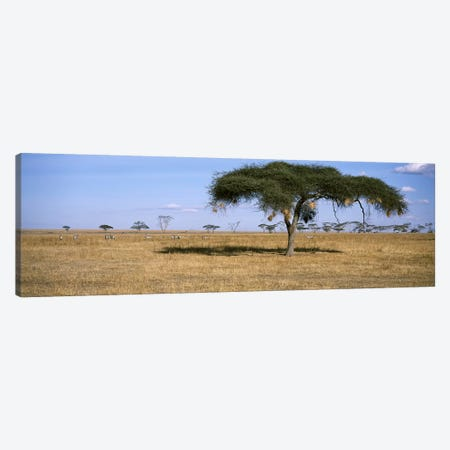 African Plains Landscape, Serengeti National Park, Tanzania Canvas Print #PIM6899} by Panoramic Images Canvas Print