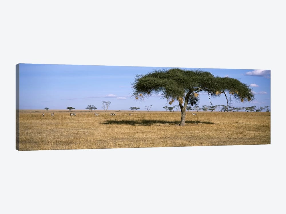 African Plains Landscape, Serengeti National Park, Tanzania by Panoramic Images 1-piece Canvas Art Print