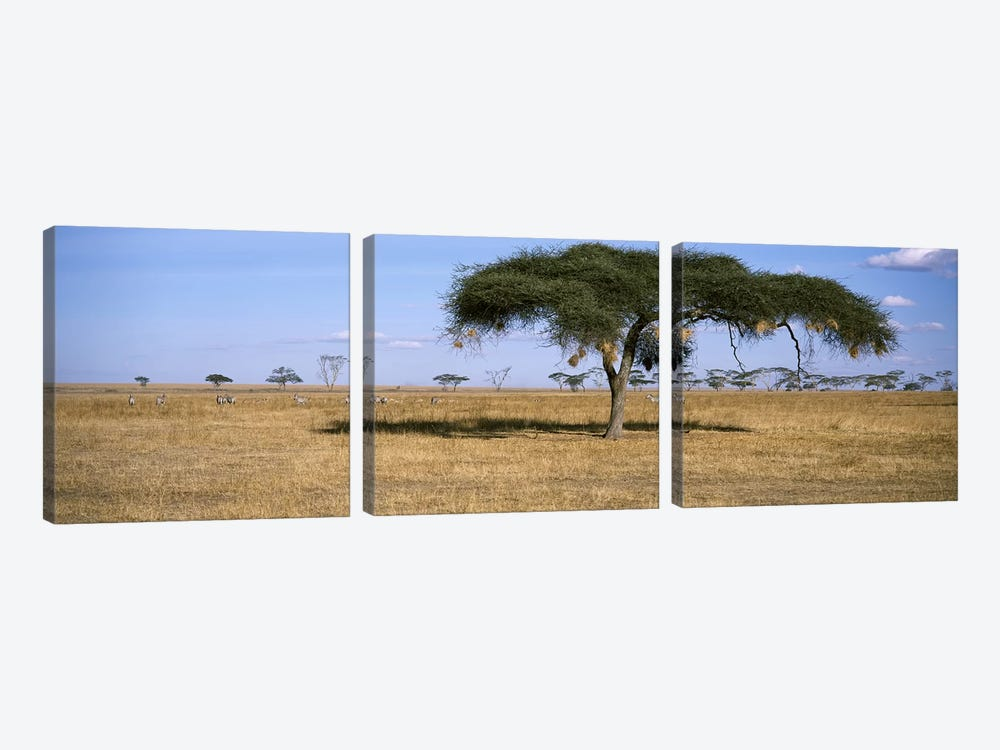 African Plains Landscape, Serengeti National Park, Tanzania by Panoramic Images 3-piece Canvas Art Print