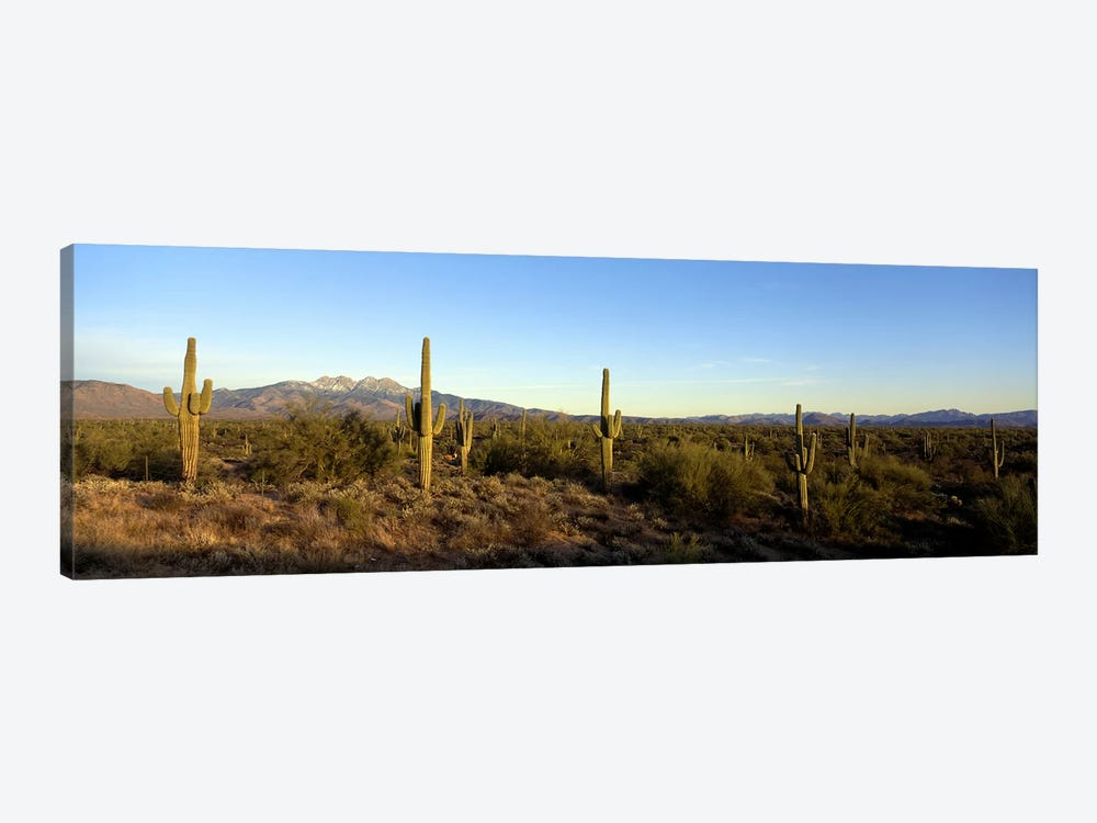 Desert Landscape With Four Peaks In The Background, Maricopa County, Arizona, USA by Panoramic Images 1-piece Canvas Art