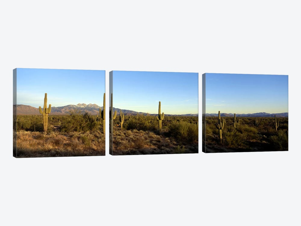 Desert Landscape With Four Peaks In The Background, Maricopa County, Arizona, USA by Panoramic Images 3-piece Canvas Artwork
