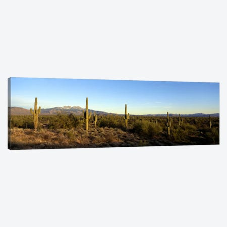 Desert Landscape With Four Peaks In The Background, Maricopa County, Arizona, USA Canvas Print #PIM6935} by Panoramic Images Art Print