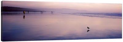 Sandpiper on the beach, San Francisco, California, USA Canvas Print #PIM7000