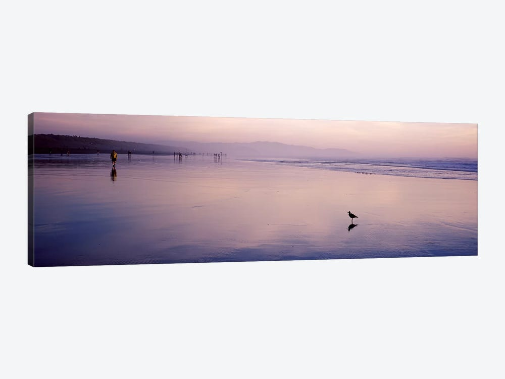 Sandpiper on the beach, San Francisco, California, USA by Panoramic Images 1-piece Canvas Artwork