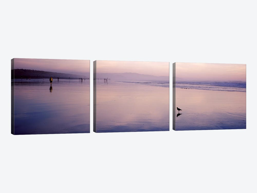 Sandpiper on the beach, San Francisco, California, USA by Panoramic Images 3-piece Canvas Artwork