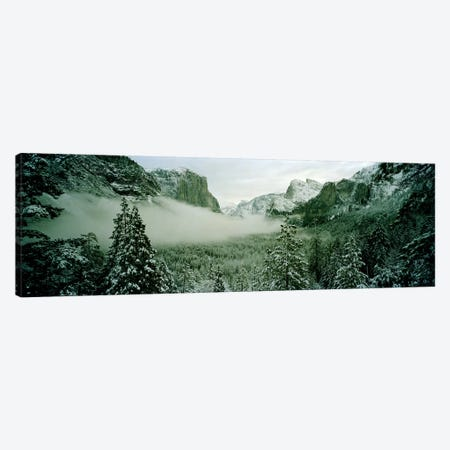 Trees in a forest, Yosemite National Park, Mariposa County, California, USA Canvas Print #PIM7015} by Panoramic Images Art Print
