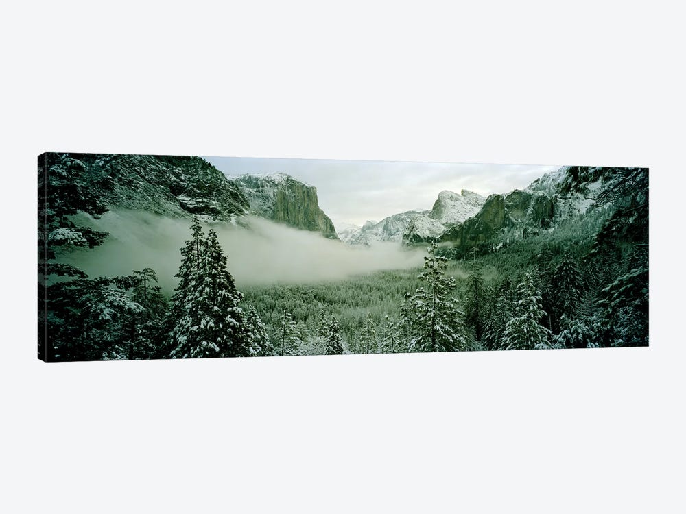 Trees in a forest, Yosemite National Park, Mariposa County, California, USA by Panoramic Images 1-piece Canvas Artwork