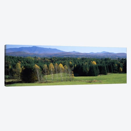 Trees in a forest, Stowe, Lamoille County, Vermont, USA Canvas Print #PIM7036} by Panoramic Images Art Print