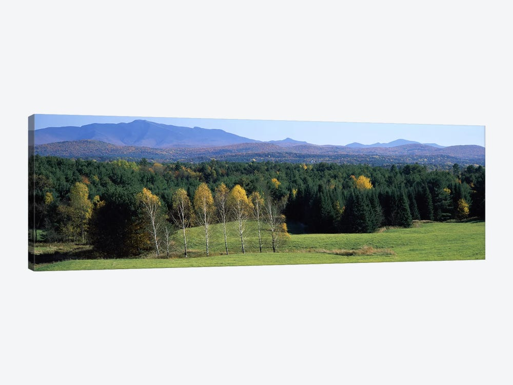 Trees in a forest, Stowe, Lamoille County, Vermont, USA by Panoramic Images 1-piece Art Print
