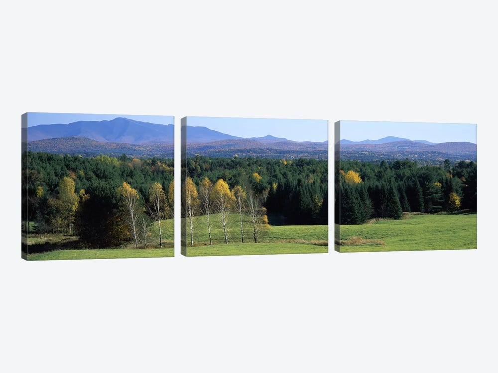 Trees in a forest, Stowe, Lamoille County, Vermont, USA 3-piece Canvas Art Print