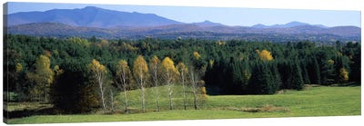 Trees in a forest, Stowe, Lamoille County, Vermont, USA Canvas Art Print