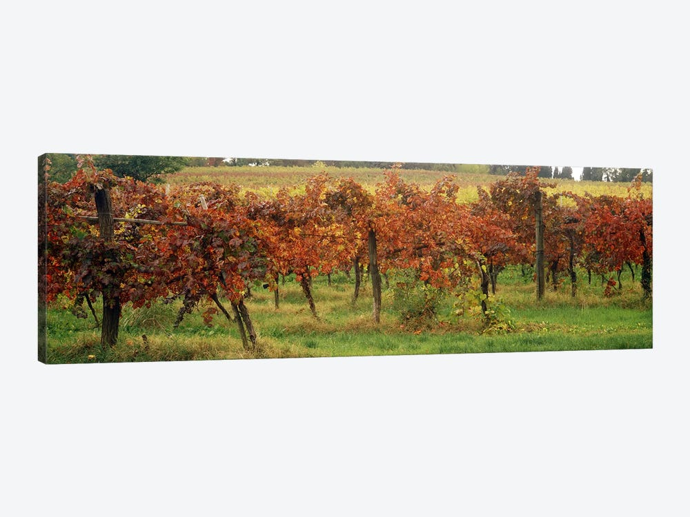 Close-Up Of A Vineyard Landscape, Emilia-Romagna, Italy 1-piece Canvas Art Print