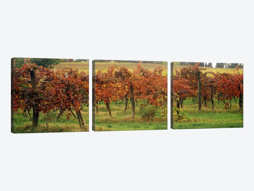 Close-Up Of A Vineyard Landscape, Emilia-Romagna, Italy by Panoramic Images 3-piece Canvas Art Print