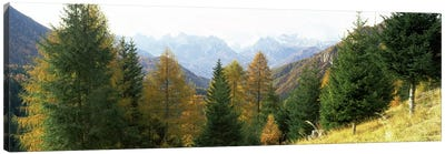Larch trees with a mountain range in the background, Dolomites, Cadore, Province of Belluno, Veneto, Italy Canvas Art Print