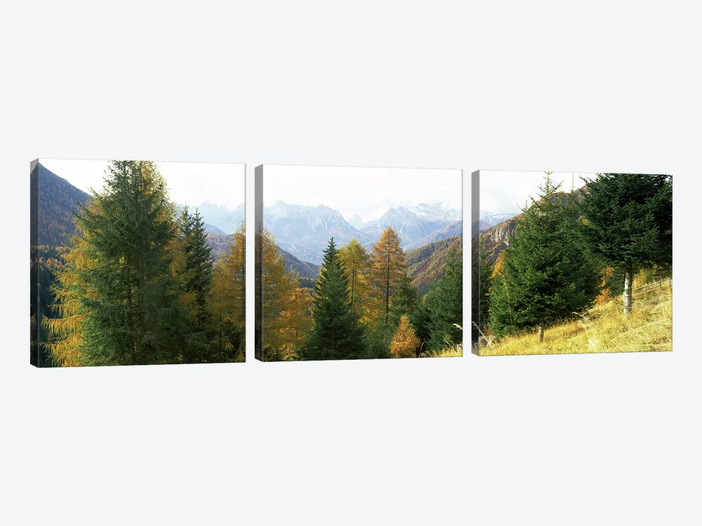 Larch trees with a mountain range in the background, Dolomites, Cadore, Province of Belluno, Veneto, Italy by Panoramic Images 3-piece Canvas Art Print