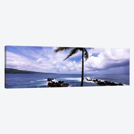 Palm tree on the coast, Honolulu Nui Bay, Nahiku, Maui, Hawaii, USA Canvas Print #PIM7104} by Panoramic Images Canvas Print