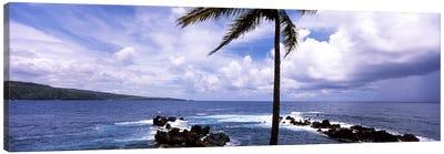 Palm tree on the coast, Honolulu Nui Bay, Nahiku, Maui, Hawaii, USA Canvas Print #PIM7104